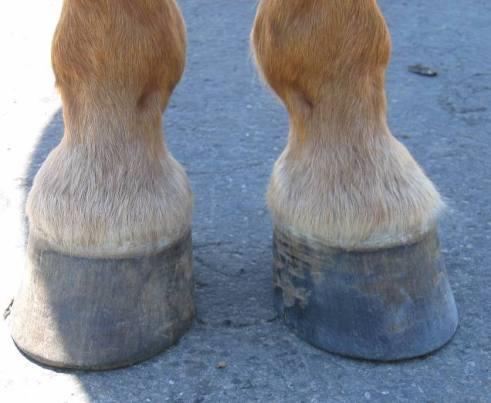 horse_hooves.jpg